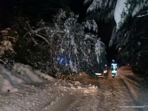 2010-12-28 TH Baum auf Straße 1